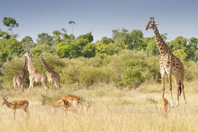 TheKnot Africa Safari Honeymoon.jpg