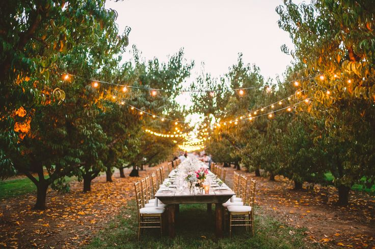 Outdoor Dinner in Orchard with String Lights.jpg