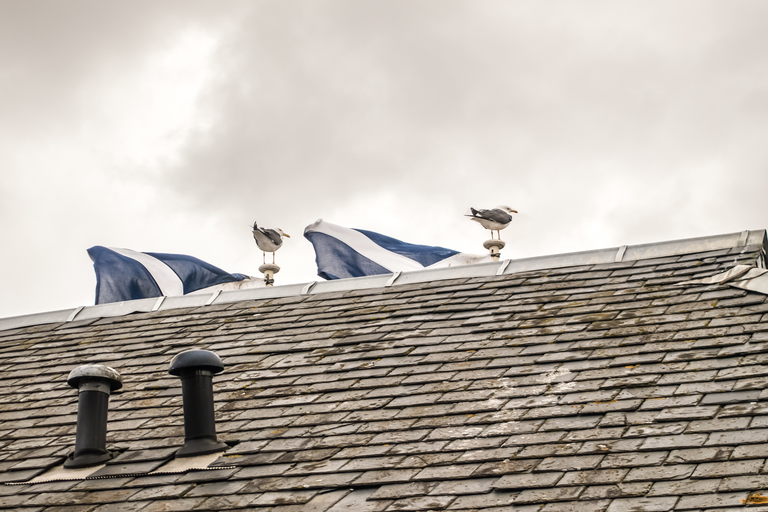 Scotland2015-244.jpg