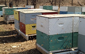 colorful_hives1.jpg