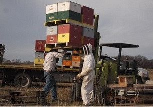 Bees hit the road ..... smaller pic1.jpg