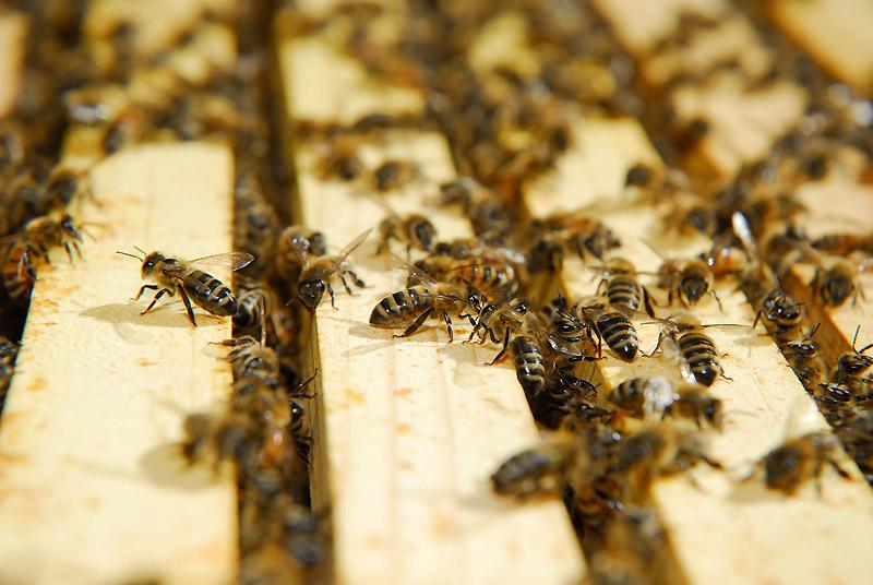 busybees.jpg