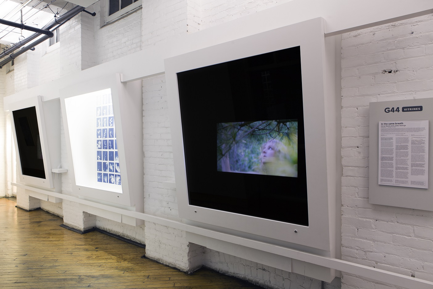"In the same breath, installation shot  Collaboration with Joële Walinga September 7 - October 13, 2018 Gallery 44, Toronto  This exhibition investigates the transference of memory from one living thing to another. ""In the same breath"" documents Nauta and Walinga speaking their most intimate memories to plants, capturing these interactions in a series of silent videos and cyanotype prints. Exploring the possibility that plants can retain memory and hold emotions, cuttings from these plants are distilled, creating scents to accompany the works and offering intimate possibilities for engaging the natural world.   gallery44.org/exhibitions/same-breath"