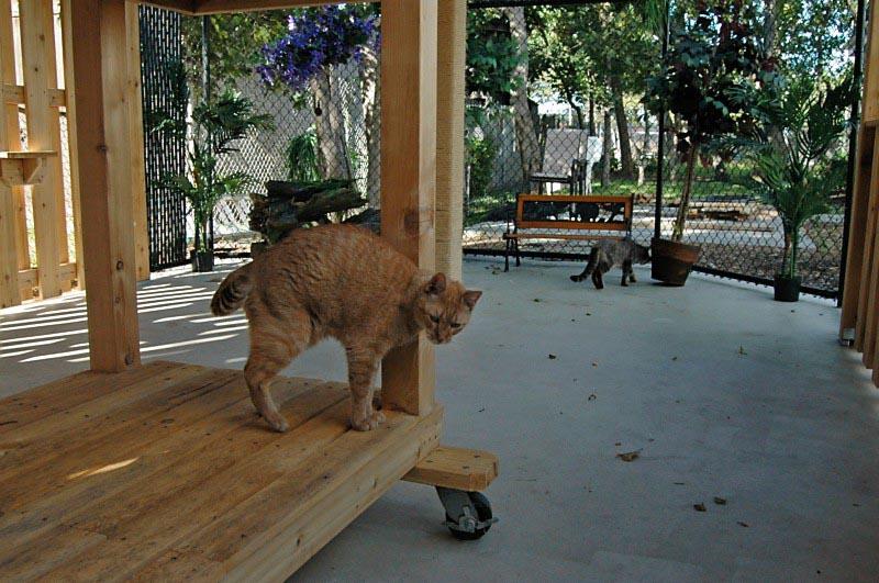 kittyrun.jpg