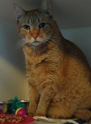 Mr. Kitty.jpg
