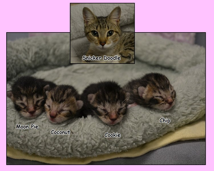 Snicker+Doodle+and+Kids.JPG