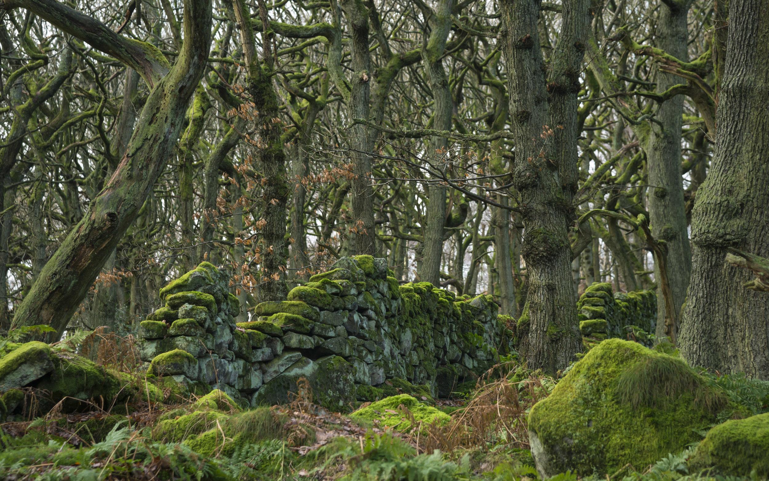 Padley Gorge Woodland