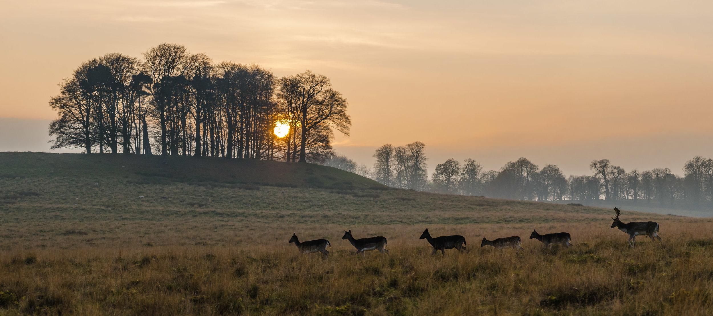 Petworth Sunset