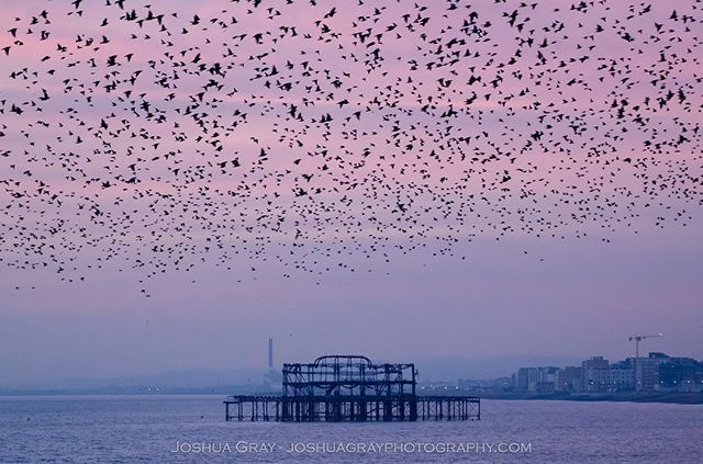 Another one from the sunset a few days ago. . . . . #photography #nature #uk_photooftheday #naturephotography #ukphoto #brighton #ig_sussex #southdowns #sussex #eastsussex #sunset #brightonupyourday #brighton_clicks #wildlife #murmuration #birds #bird_lovers #uk_wildlife_images #visitbrighton #uk_shots #ukpotd #photooftheday #instagood #lovebrighton #visitengland #winter #ig_birds #birdfreaks #animals