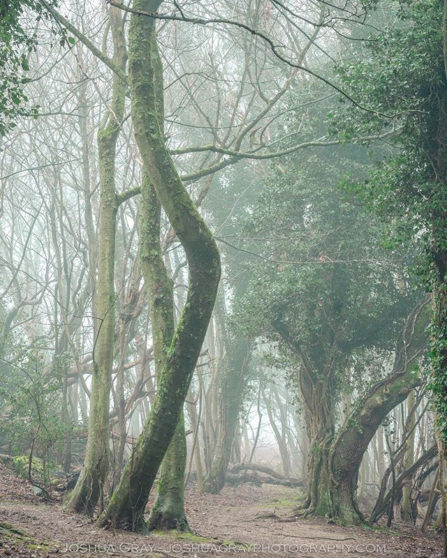 Loved the conditions on the hills earlier this week. . . . . #southdowns #earthcapture #photography #nature #naturephotography #landscape #landscapephotography #mist #fog #woods #trees #nikon #photooftheday #instagood #woodland #ig_sussex #eastsussex #tree_shotz #tree_brilliance #ukpotd #uk_shots #ukphotography #uk_photooftheday #countryside #uk_greatshots #igerssussex #gloriousbritain #1x #ig_countryside
