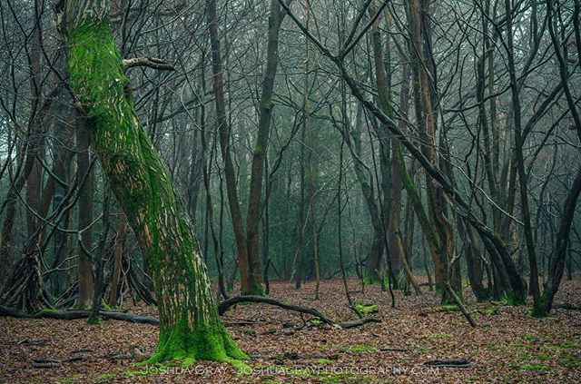 Another foggy woodland scene from last week. . . . . #southdowns #uk_greatshots #gloriousbritain #ig_countryside #earthcapture #naturephotography #photooftheday #photography #nature #landscape #landscapephotography #woodland #trees #fog #chailey #ig_sussex #eastsussex #forest #instagood #ukpotd #uk_shots #uk_shotz #travel #getoutdoors #sussex #naturelovers #nature_good #markstakescommon