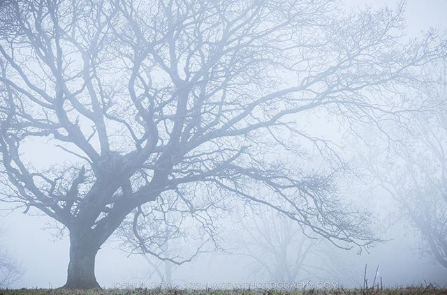 From a wander on the hills a few weeks ago. . . . . #southdowns #explore #getoutdoors #uk_greatshots #naturephotography #photography #eastsussex #sussex #nature #landscape #mist #fog #landscapephotography #ig_sussex #instagood #photooftheday #ukpotd #uk_shots #uk_shotz #tree #treesofinstagram #naturelovers #brighton #tree_magic