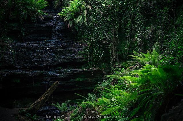 Never expected to find a little spot of rainforest in Sussex. . . . . #naturephotography #photography #nature #sussex #eastsussex #hastings #oldroargill #waterfall #explore #landscape #landscapephotography #photooftheday #instagood #water #ferns #ig_sussex #travel #ukpotd #uk_shots #sussexdowns #southdowns #nikon #plants #uk #england #countryside