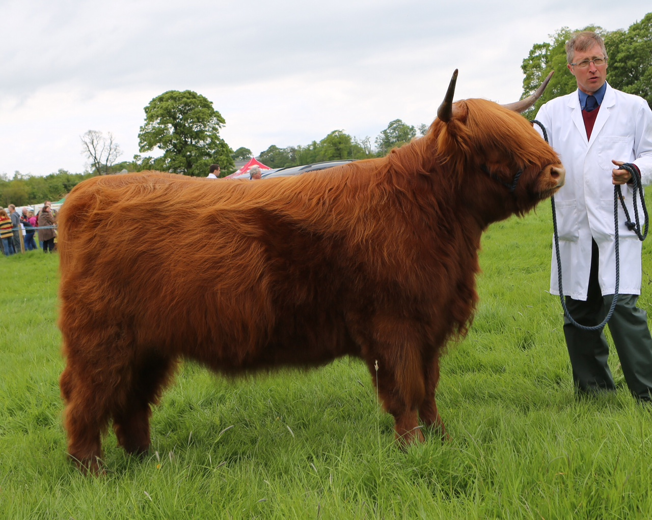 Bachy Mor 30th of Woodneuk - Stewarton Show Champion