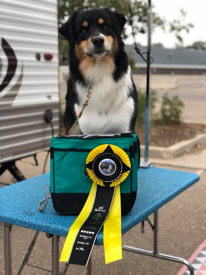 3rd place from the BBX class at the ASCA nationals under Sr. Breeder judge Kym Base