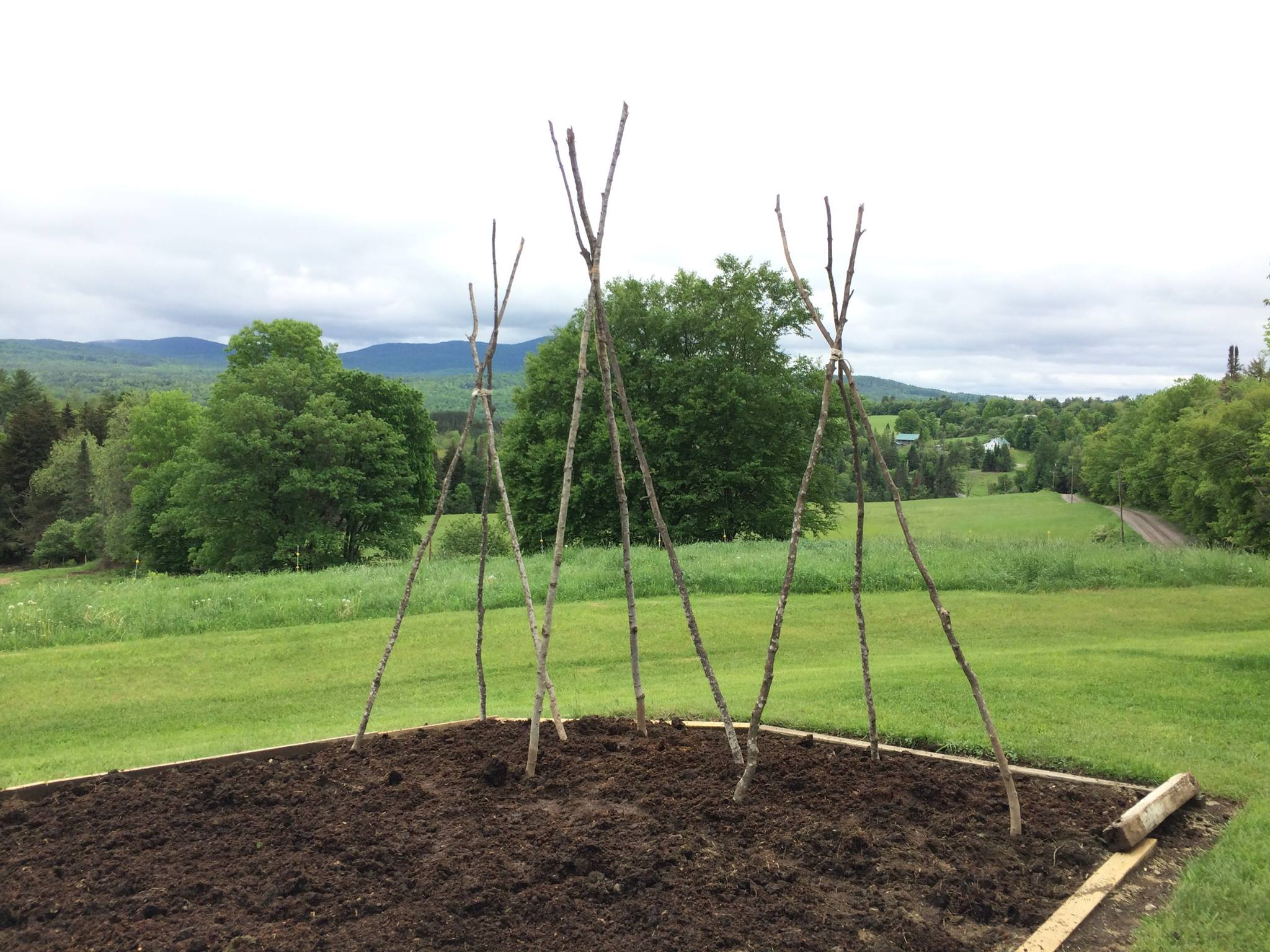 June 2, beds and tripods are ready. Tripods are maple saplings lashed at the top boy scout style, each pole ~10 feet long.