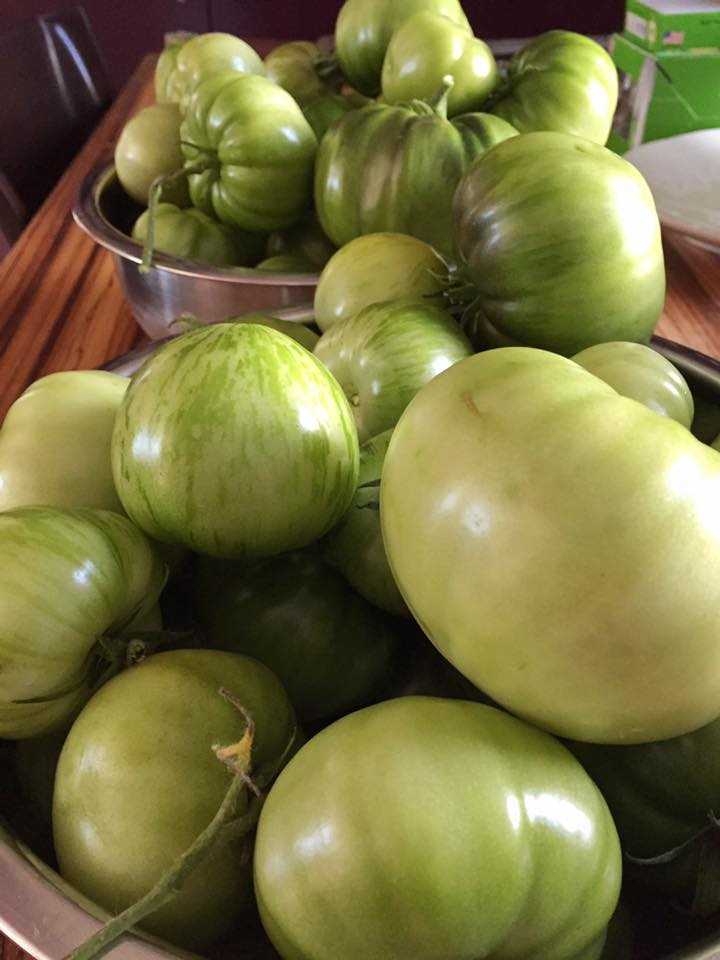 Aruna:  I will end up with only 1.5 lbs of beans, but I just harvested about 12 lbs of green tomatoes if that helps?