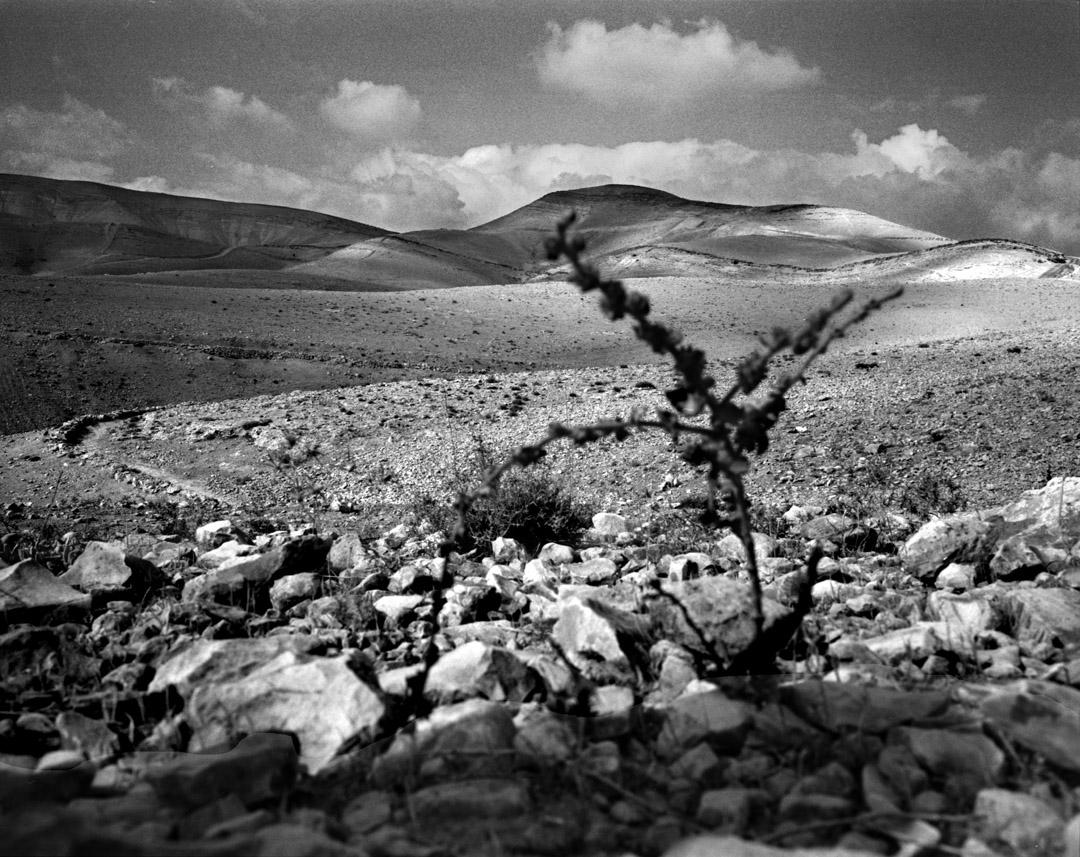Palestinian desert 1.jpg