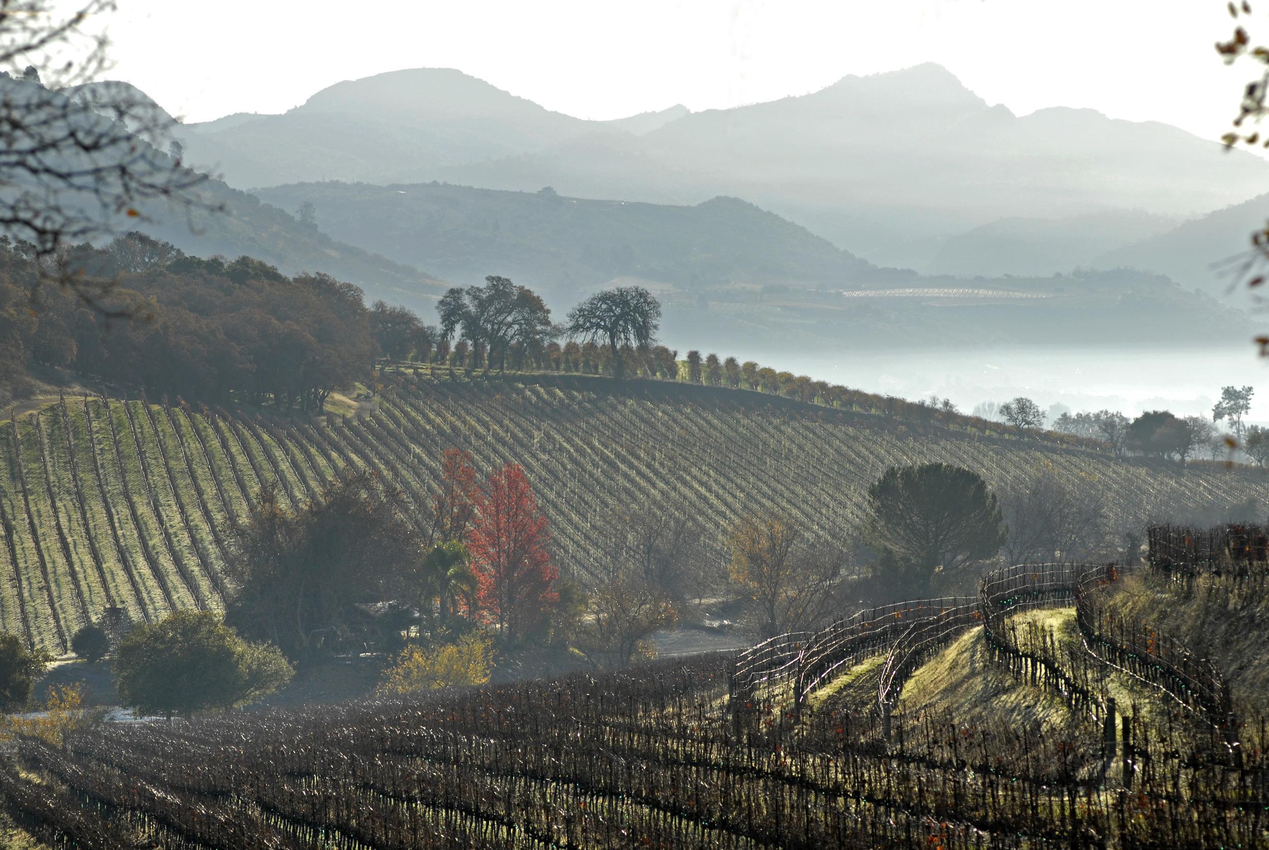 Napa Valley view-1.jpg