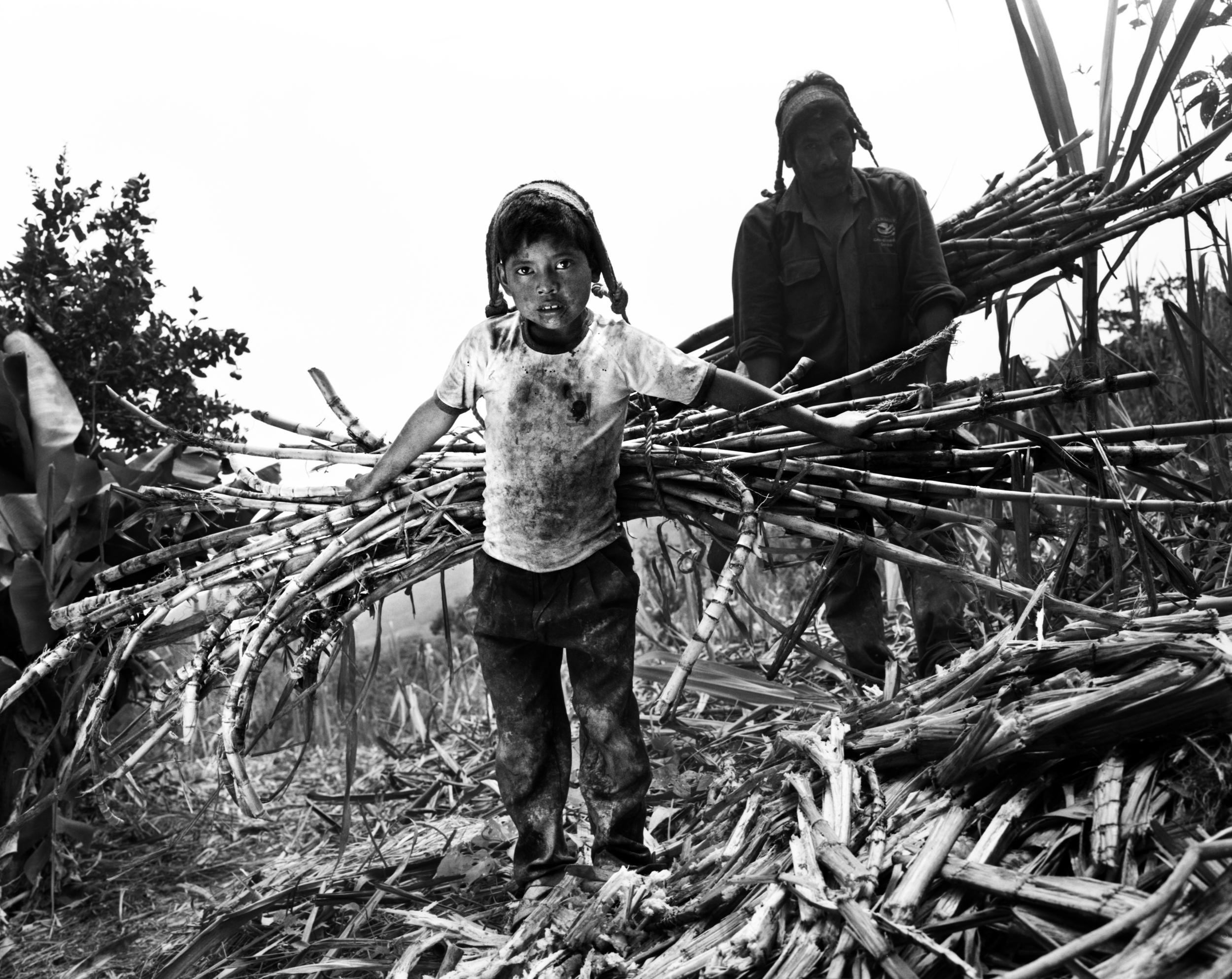 Sugarcane boy.jpg