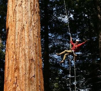giantsequoia.jpg