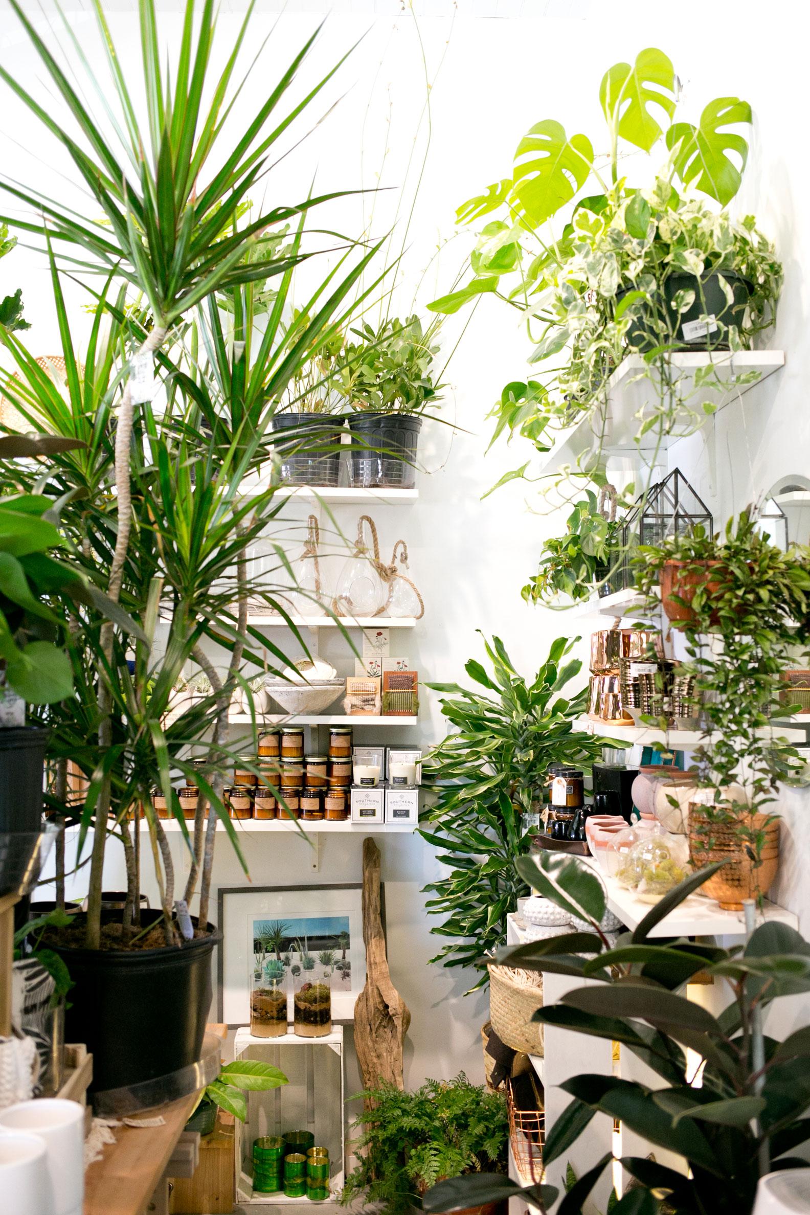 Plant-Shop-The-Zen-Succulent.jpg