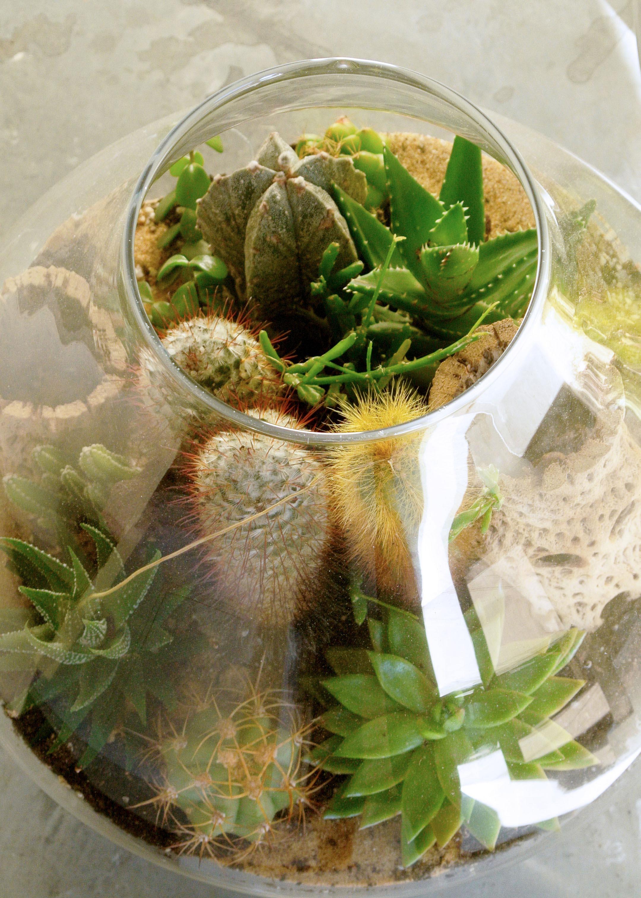 One On One Succulent Terrarium Building Workshop Megan George The Zen Succulent Durham S Neighborhood Plant Gift Shop