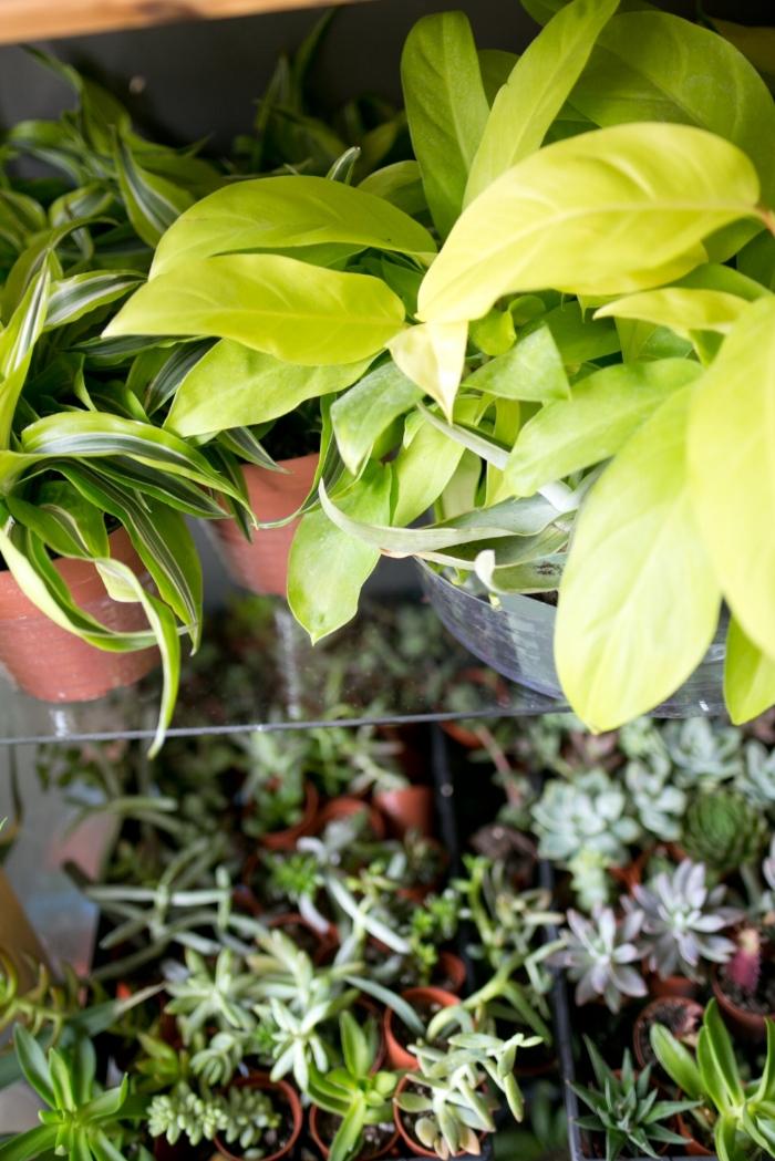 Happy Plants = Happy Plant Parent
