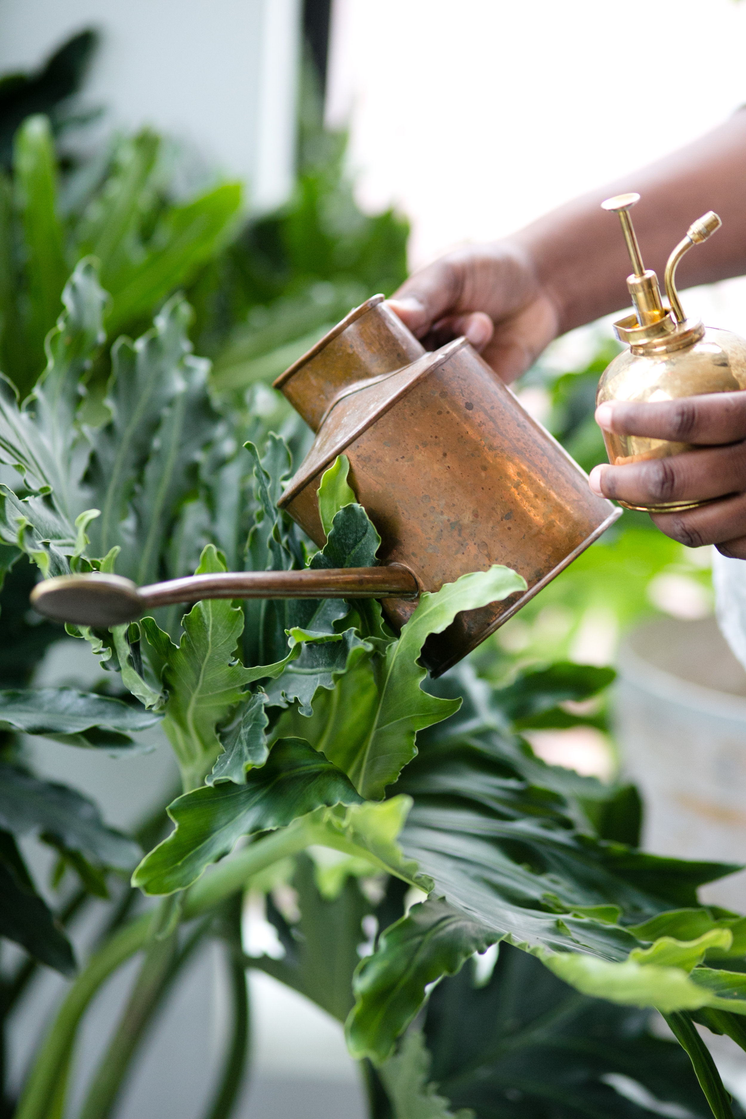 Always, always, always water after repotting. Spring is also good opportunity to restock your plant parent accessories, like watering cans and misters.