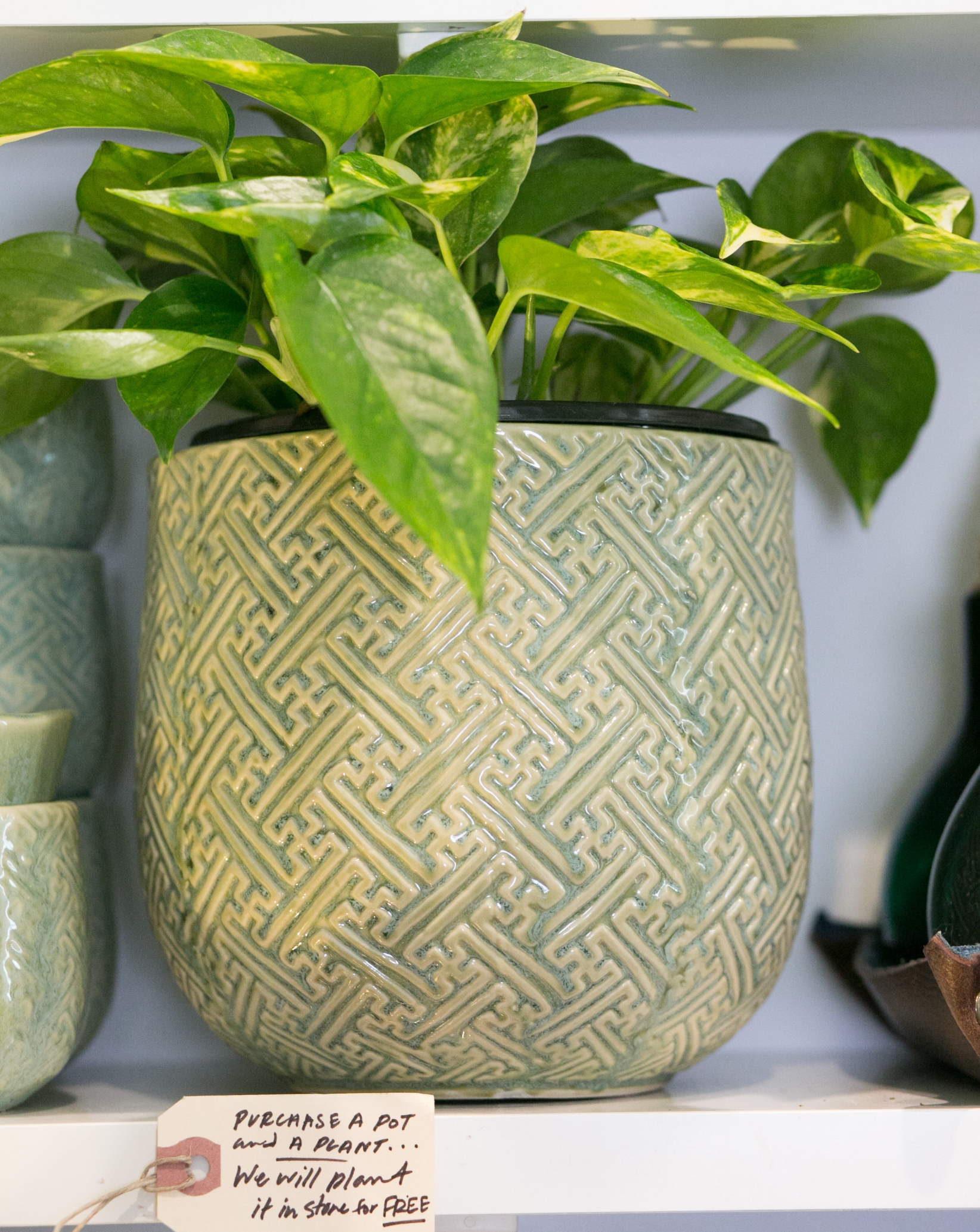 Pothos, or Devil's Ivy ( Epipremnum aureum ) is a great low maintenance, outdoor friendly plant. Treat yo'self to one and a new pot, and we'll plant it for you.