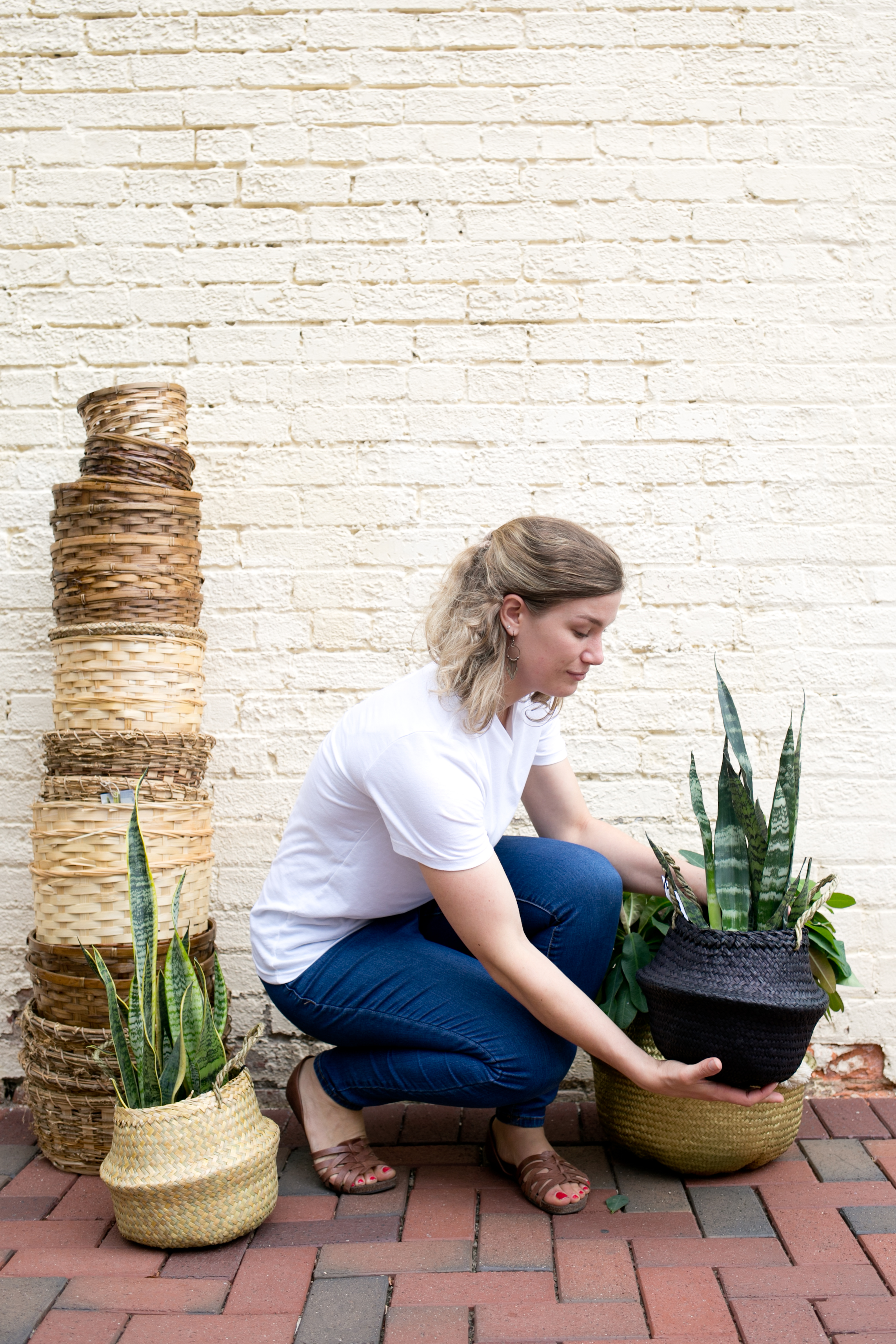 Snake plants (Sansevieria sp.) look good indoors and outdoors.