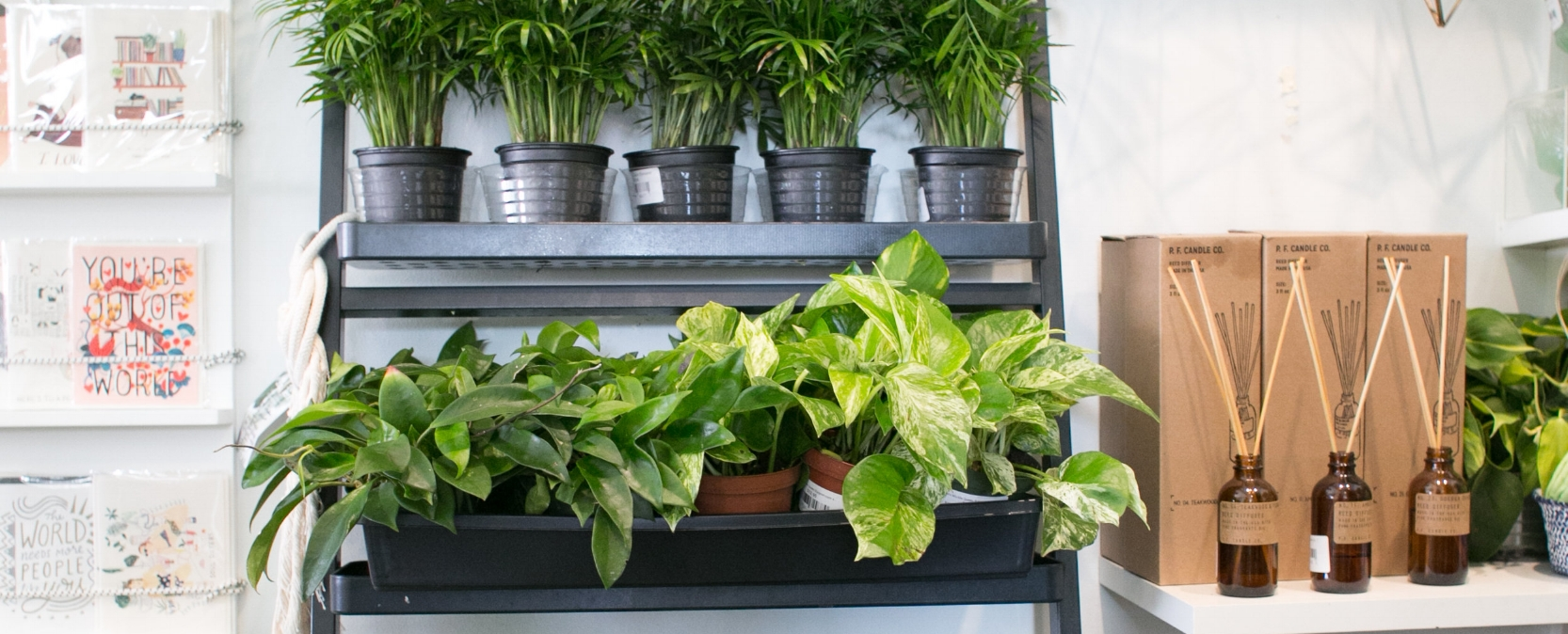 Devil's ivy (right) looks great on bookcases and in office spaces that don't get much light.