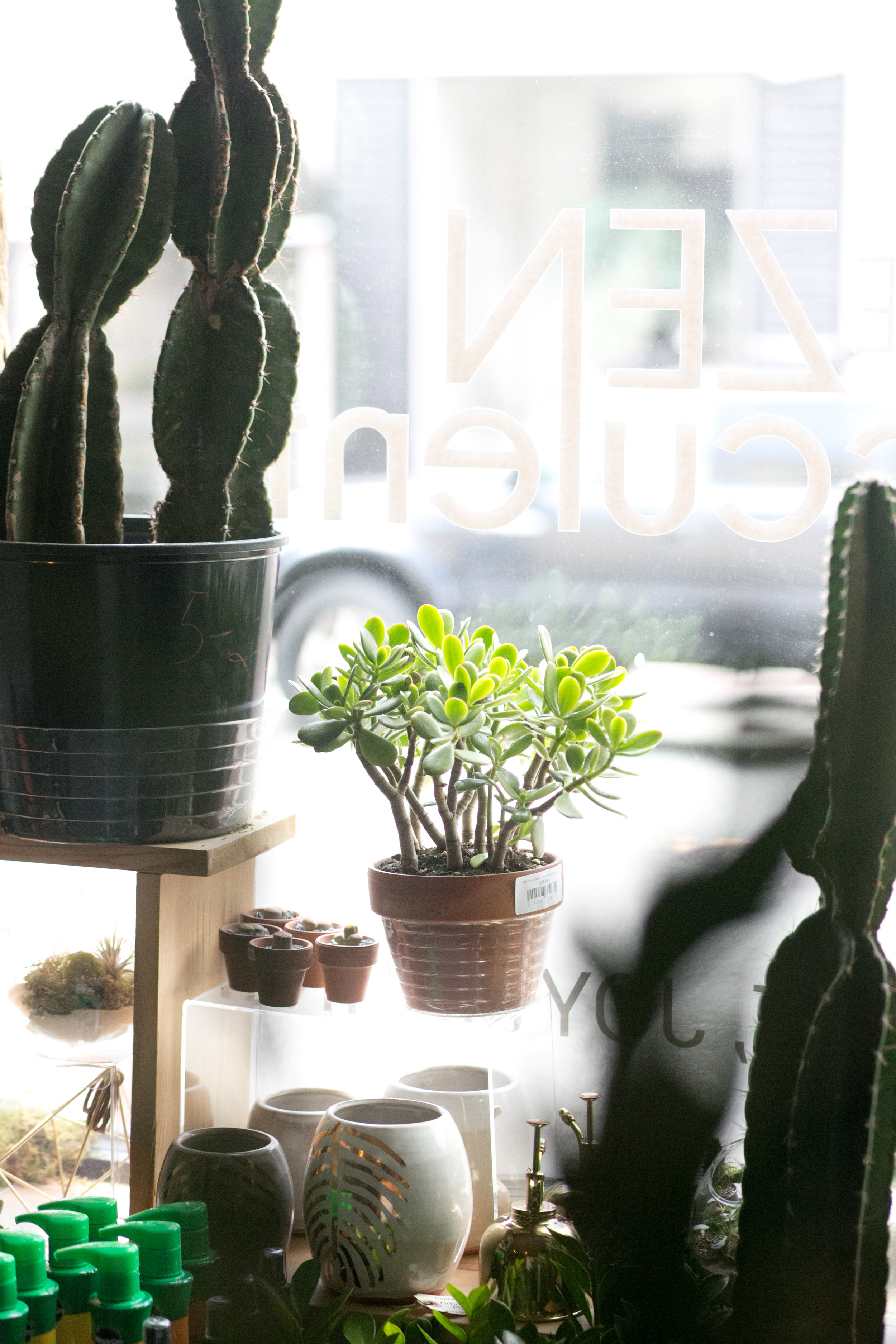 A sunny window is the optimal place to keep your succulents and cacti.