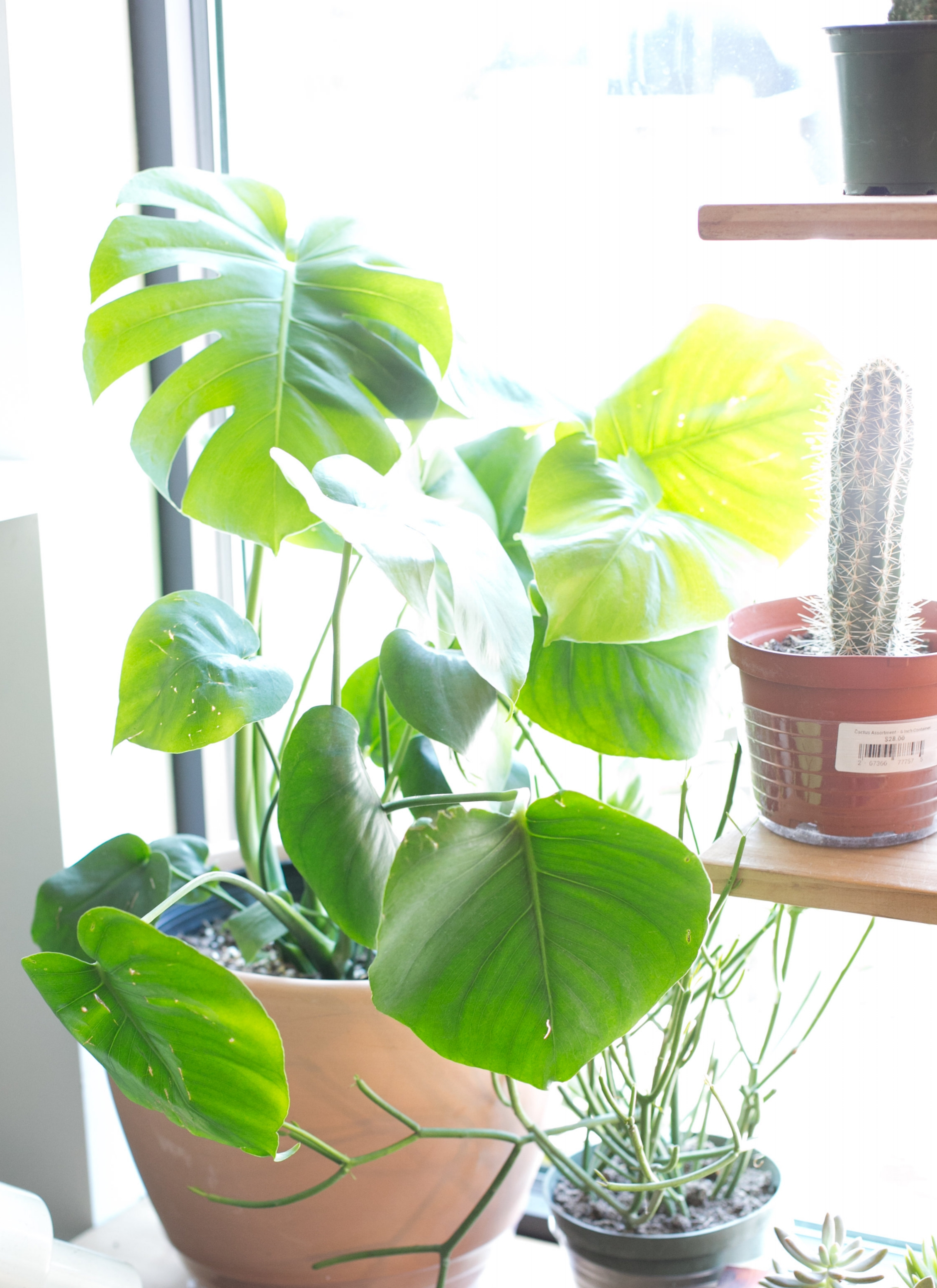 Let the sun shine! Many plants enjoy some direct sunlight, preferably in the morning.