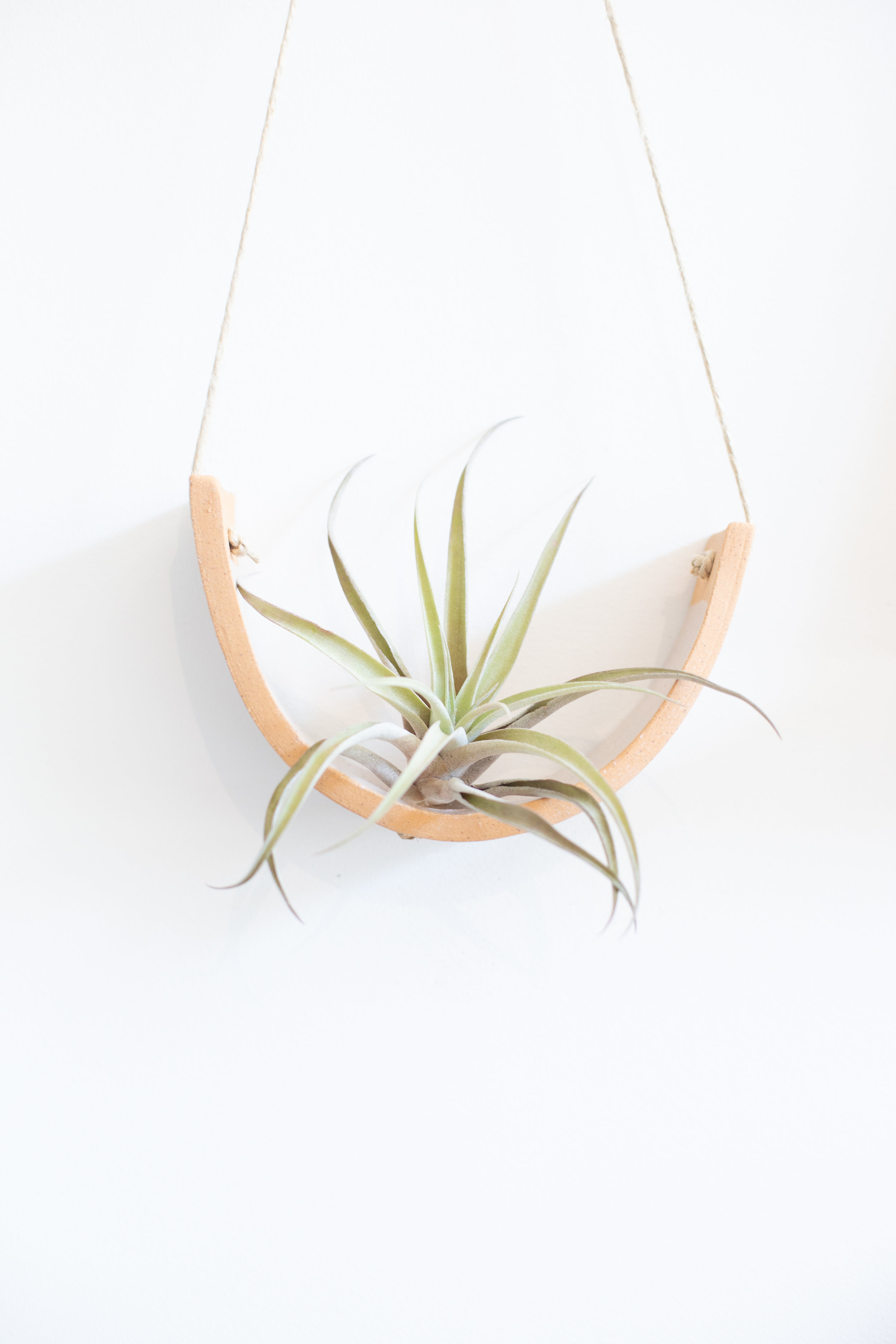 Air plants need more humidity than cacti or succulents. Use some of the tips described in this article to boost the humidity to keep it happy. You can also try keeping your air plants and ferns in a humid-rich room, like a bathroom.