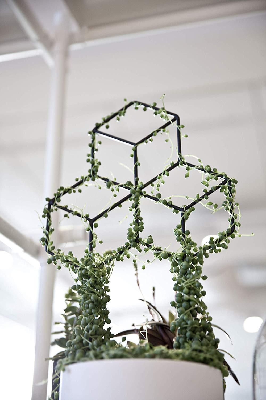 Trellis with String of Pearls via Seway Gardens