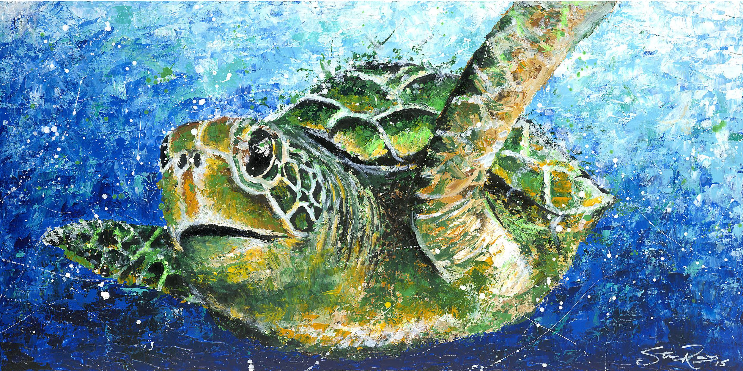 Turtle med res.jpg