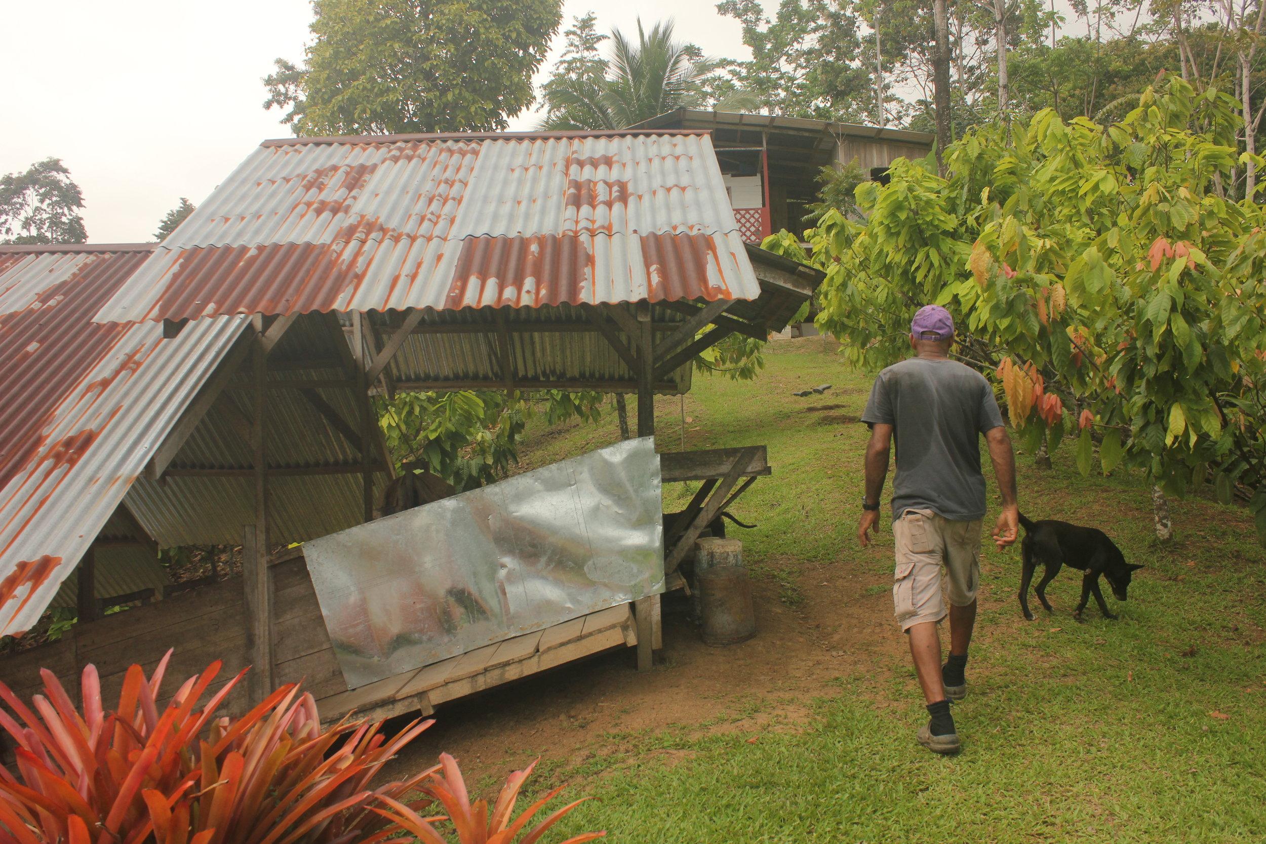 Daniel South trabajando en su finca. San Andres, Talamanca, Limón, Costa Rica. Foto por Katie Beck.