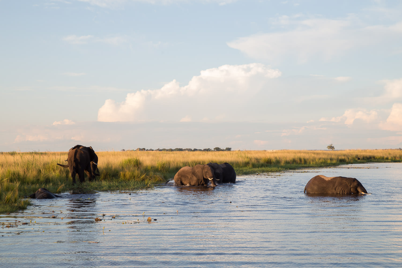 Big 5 - Elephants.jpg