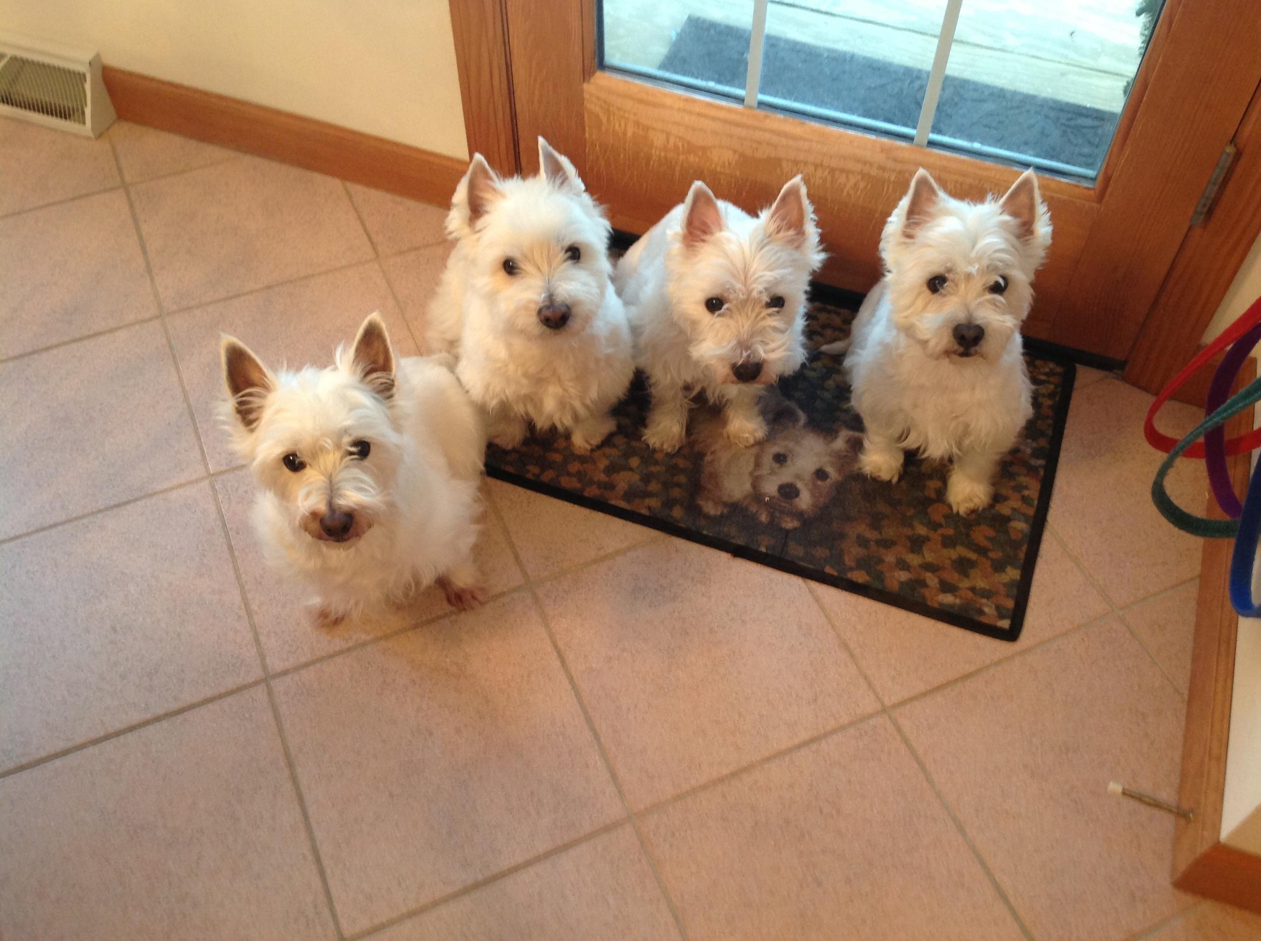 Molly B, Duffy, Rosebud and Spencer