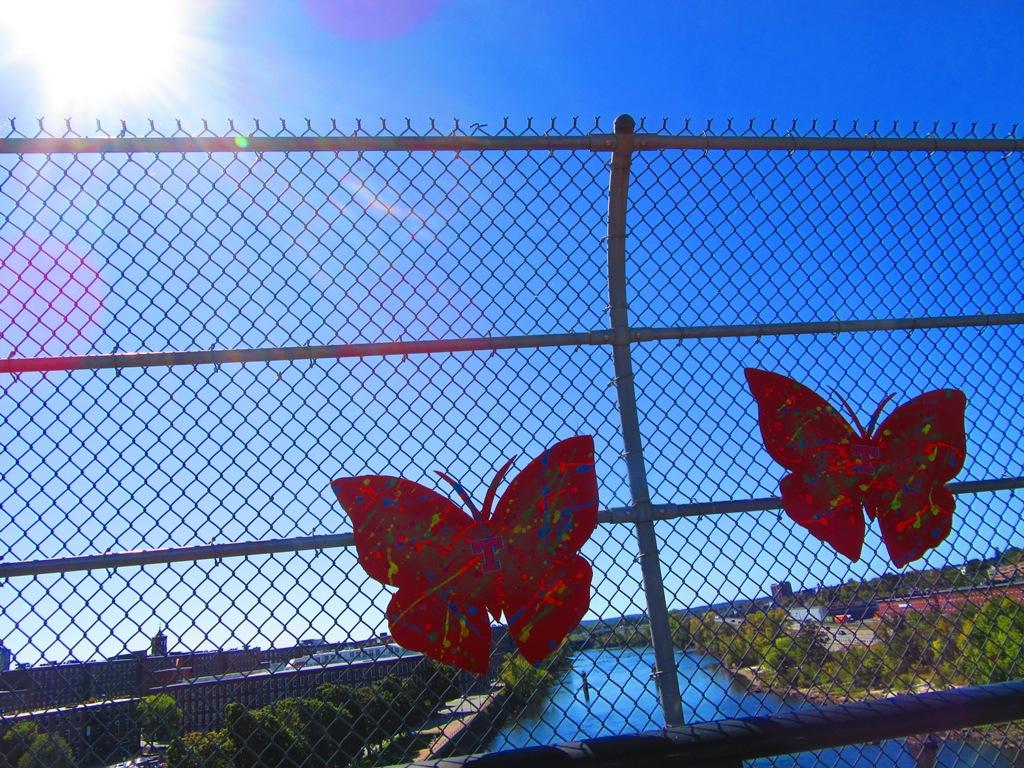 bestpicbutterfliesonbridge.JPG