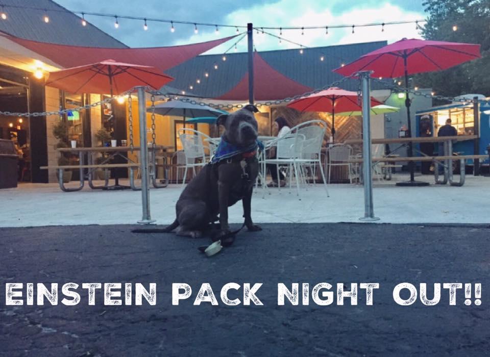 Oakland County Mi Einstein Dog Training