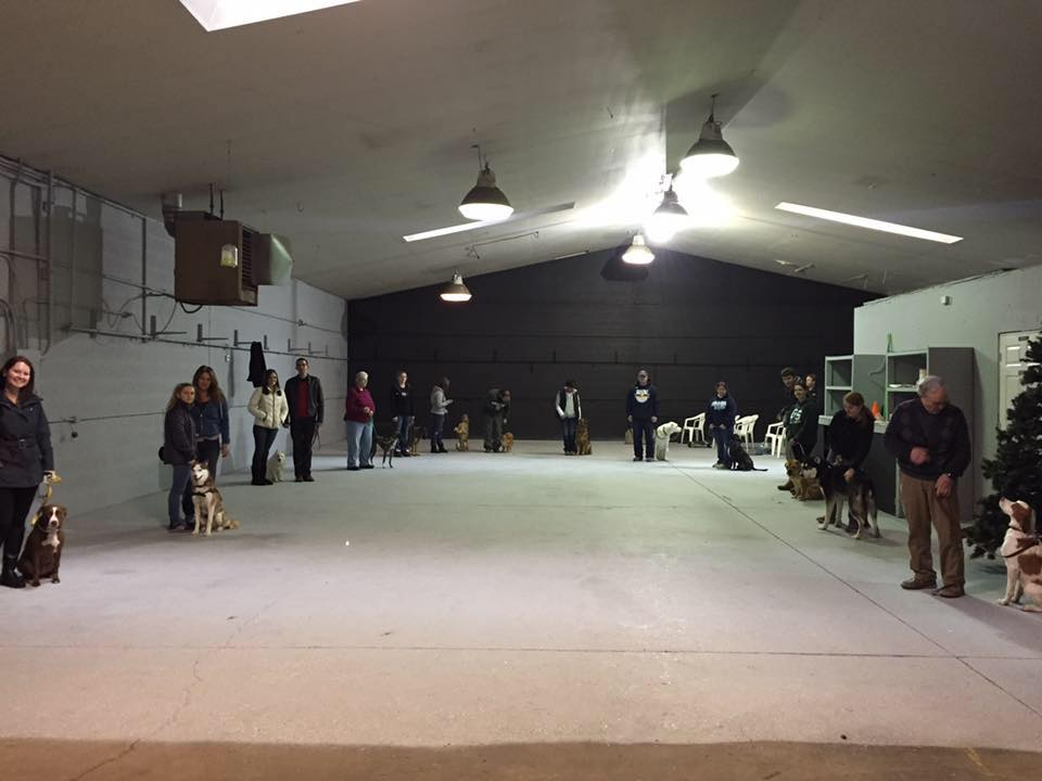 group dog training class at our facility in fenton, mi