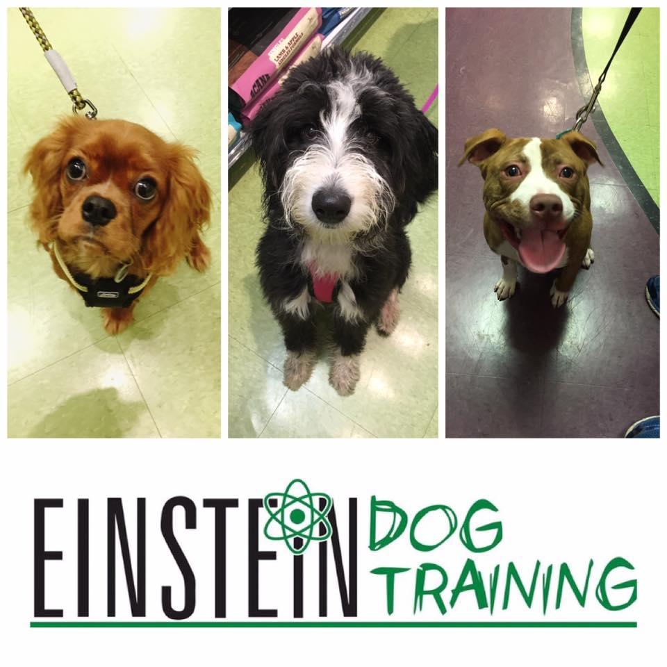 group puppy class