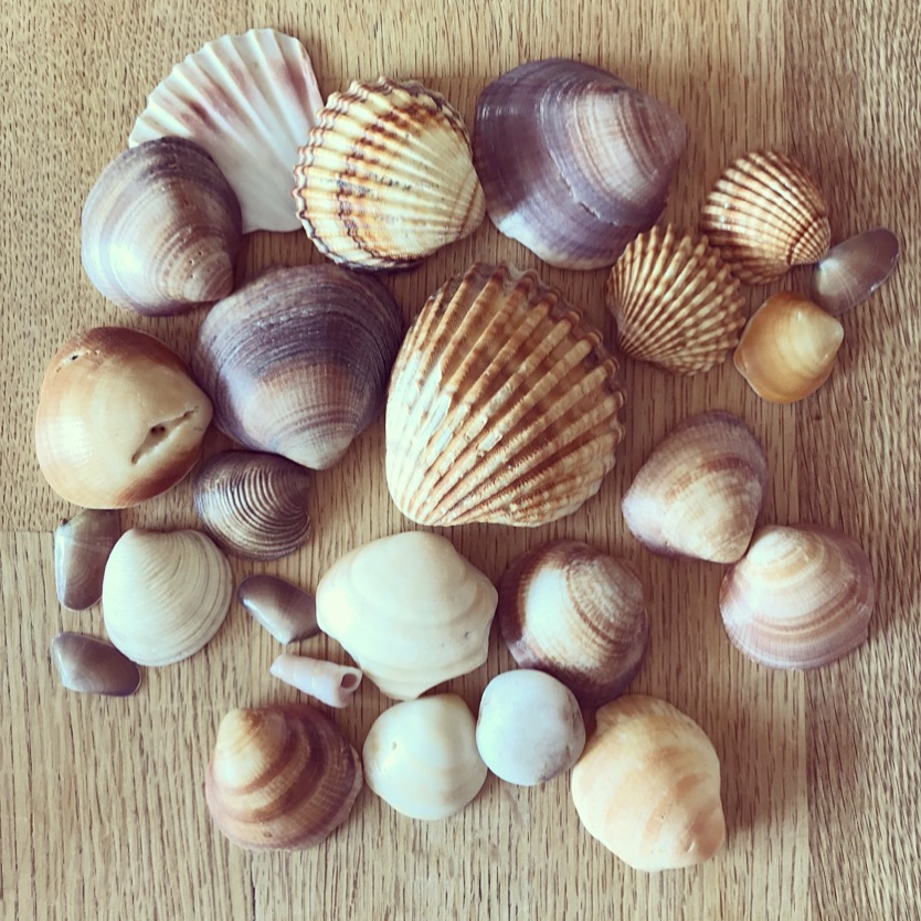 Treasures found at the beach in Morocco & Spain