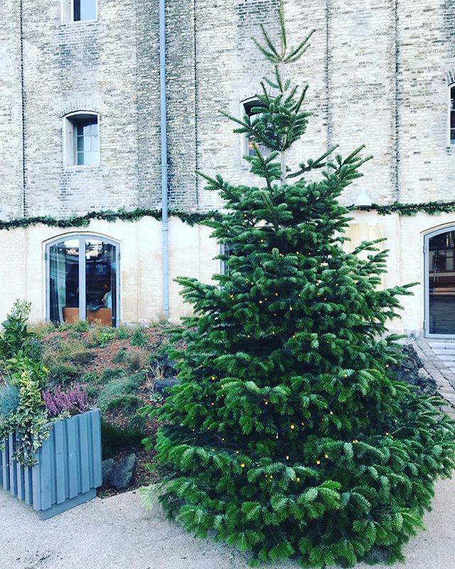 Natural nordic vibes in Strandgade 🌲 . . . . . . . . . . . . . . #copenhagen #københavn #nordicliving #balanced #findinghygge #forestlove #vitaminn #cosyliving #cosiness #hygge #hyggelife #sparkjoy #thatscandinavianfeeling #cosy #cozy #scandinavian #scandi #pine #hverdagslykke #greencity #instagramhygge