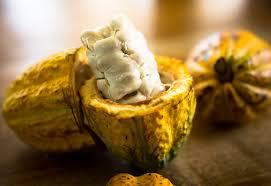 cacao honey.jpg