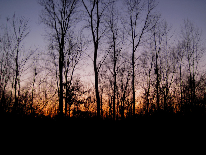 sun setting behind forest
