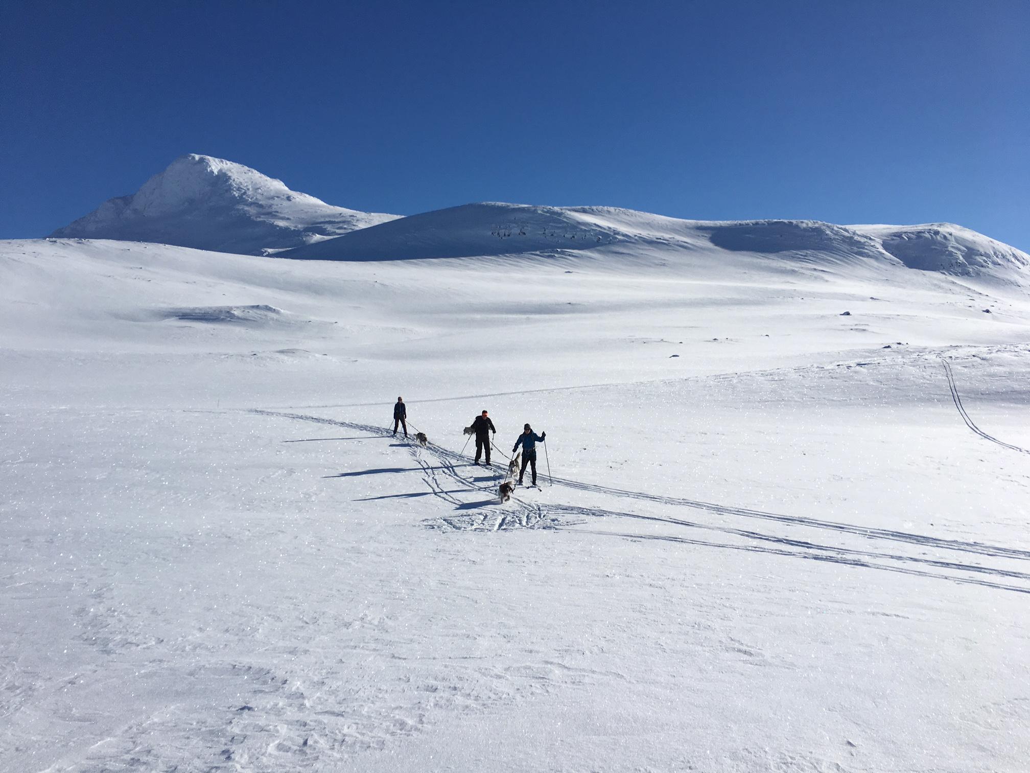 Sletter og topper - Terrenget er variert med slakkere høyfjellsletter og alpine topper på opp til 1.920 moh. i dagsturavstand.