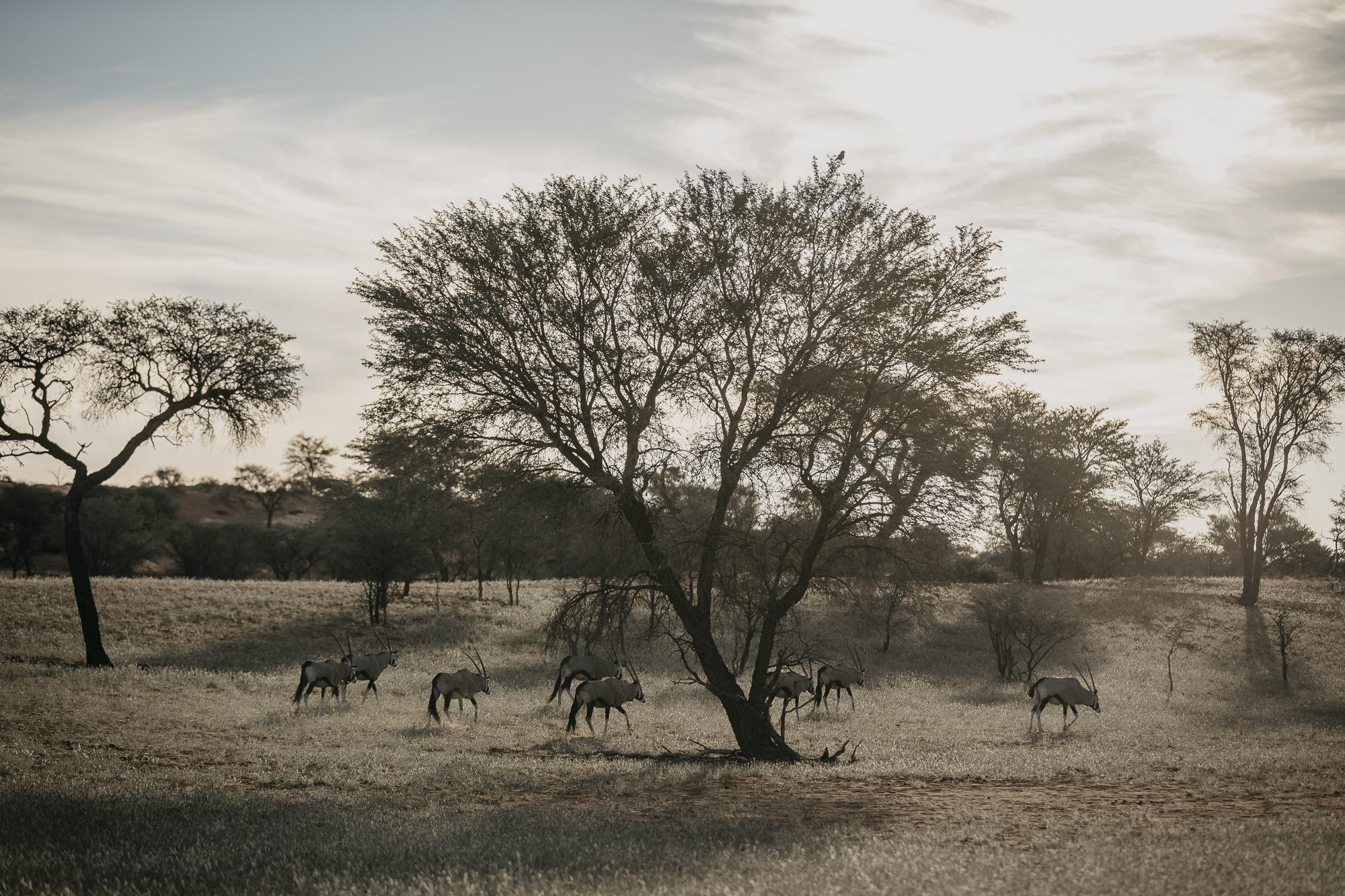 061518_Namibia_PIXd2camF_00158.jpg